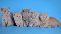 Salvador, Stella, Selena, Sofie и Sinatra One LANSHERY'S