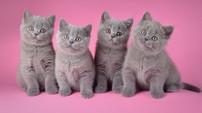 Torrie, Tifany, Tandy и Trixy One LANSHERY'S