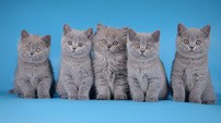 Torrie, Tifany, Tango, Tandy и Trixy One LANSHERY'S